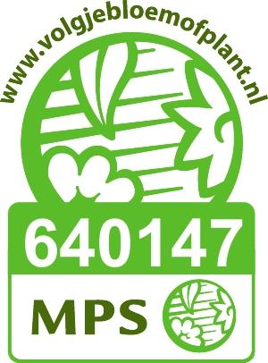 Vignet MPS-ABC NL-640147